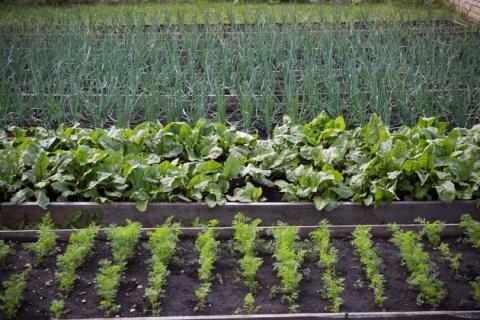 Размещаем овощи по науке