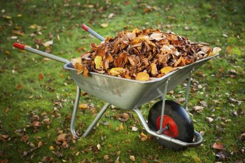 Как можно использовать опавшую листву на участке