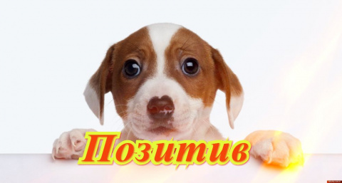 Улыбнитесь с Михалычем! Доброе утро!