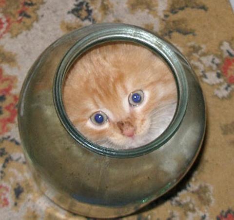 Котенок не мог вылезти из ба…