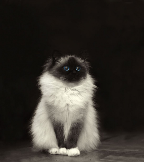 Самые уютные домашние любимцы – это пушистые котики