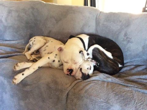 Эти две собаки в нужное время появились друг у друга...