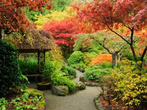 Что надо сделать в саду осенью? Садовые кашпо из щебенки (мастер-класс)