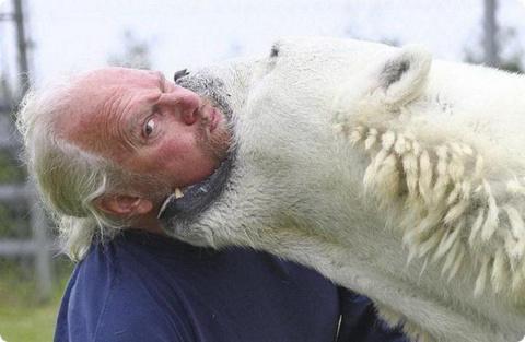 Каждое утро мужчина плавает с огромным полярным медведем! Невероятная история дружбы хищника и человека