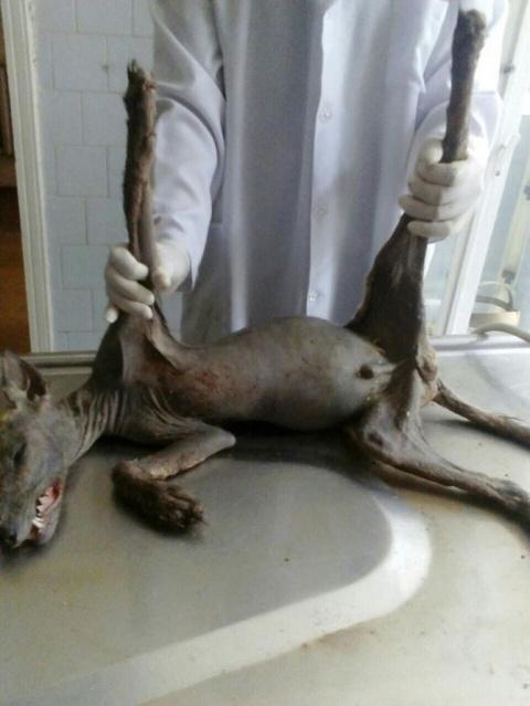 Людей шокировал неизвестный зверь, которого поймали во дворе