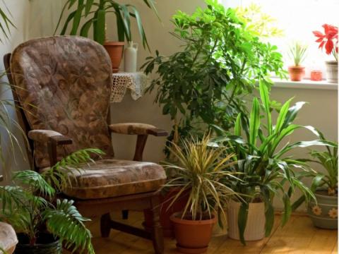 NASA представила список лучших комнатных растений для фильтрации воздуха