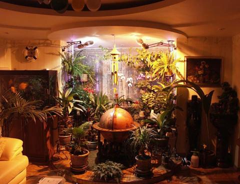МИР РАСТЕНИЙ.Закон выращивания комнатных растений (2)