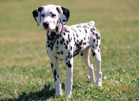 Как отучить собаку убегать о…