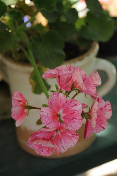 Чистый яд: Комнатные растени…