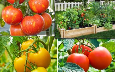 Грядка-короб для томатов: ка…