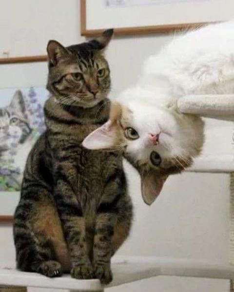 Забавные котики, любопытство…