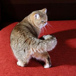 КОШКИН ДОМ. Поведенческие проблемы у кошек