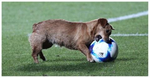 Озорной пес отобрал мяч во в…
