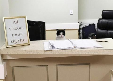 Бродячая кошка работает в доме престарелых