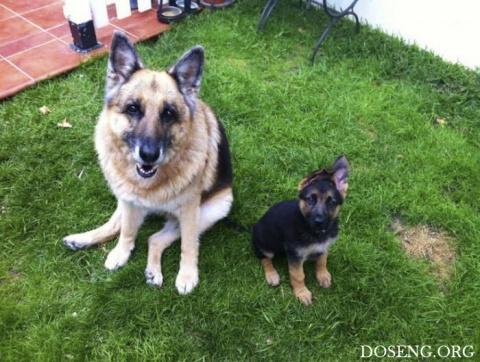 Сильные фото двух собак