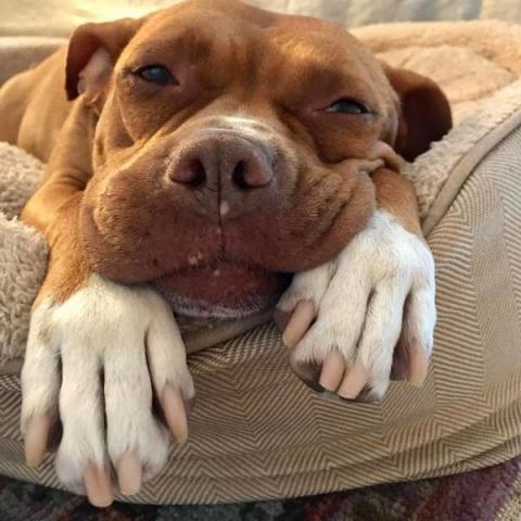 Собака, прожившая 8 лет на ц…