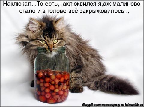 """Прикольные позы котов.Подборка для """"котоманов"""" и """"кошколюбов"""""""