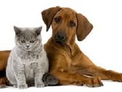 Содержание домашних животных…