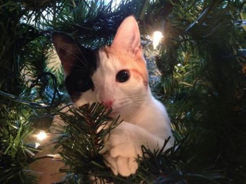 Кто больше всех рад новогодн…