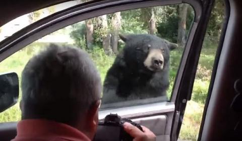 Медведь открывает дверь твоей машины