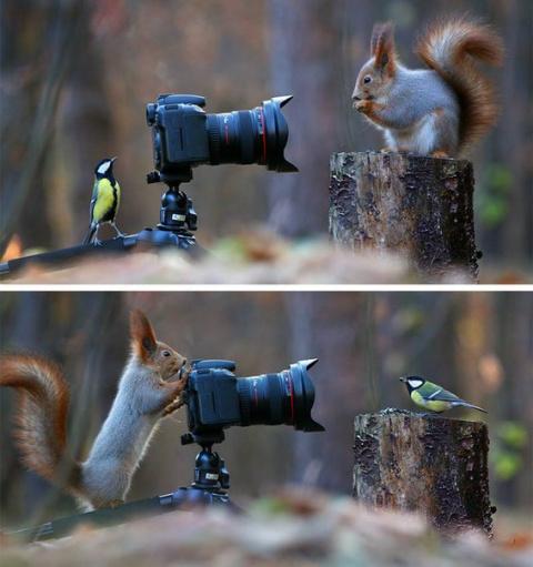 Талантливый российский фотограф Вадим Трунов создал самую красивую в мире фотосессию белки...