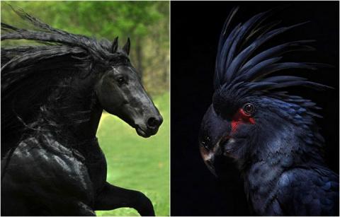 20 животных необычного тёмного окраса, которые выглядят как звезды хард-рока