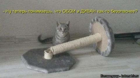 Прикольная котоматрица (31 фото)