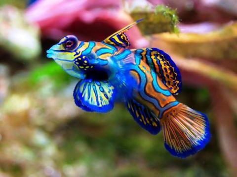 15 морских созданий, каких мы никогда ещё не видели