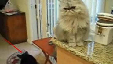 Заботливый кот достаёт из ба…