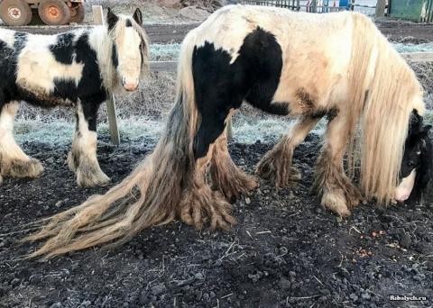Спасение брошенных людьми лошадей