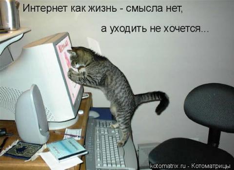 И снова коты!!!!!!!!