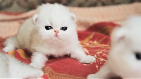 Самые милые котята уходящего года
