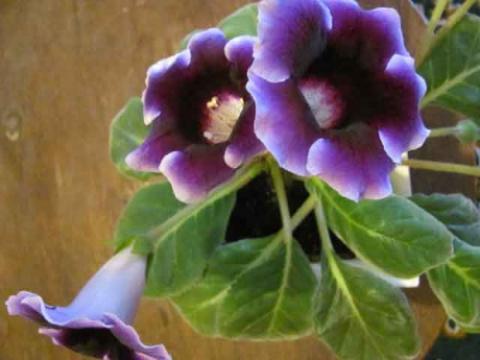Комнатные цветы выращенные из семян