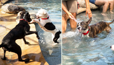 Бассейн для собак: в приюте …