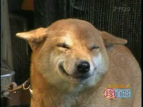 Смешные собаки-улыбаки