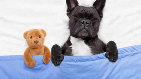 Какие сны снятся собакам