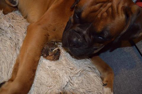 Собака нашла потерявшегося п…