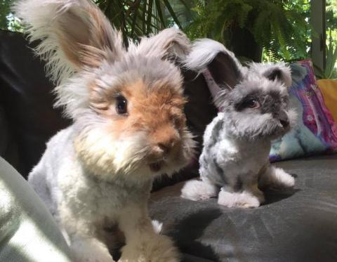 Влюбленная парочка кроликов завоевала мир