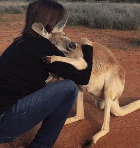Благодарная кенгурушка кажды…
