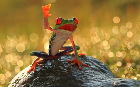 Притча о лягушке-победительнице