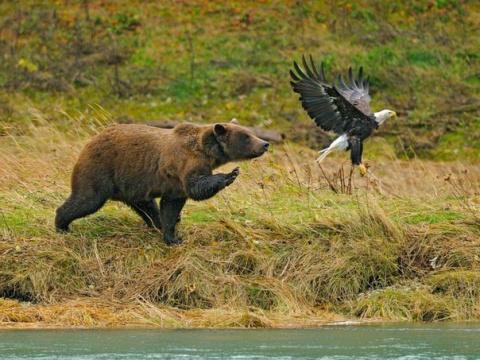 Перестаньте дразнить медведя
