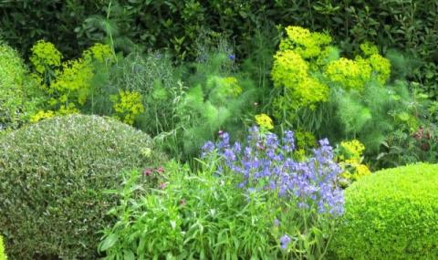 Влияние фитонцидов растений на нашу жизнь