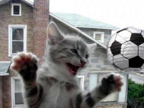 Кот футболист. И пусть нашей…