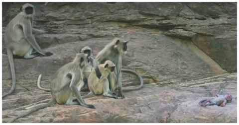 Группа обезьян оплакивает смерть робота-детеныша