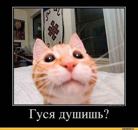 Коротко, метко, веско...)))