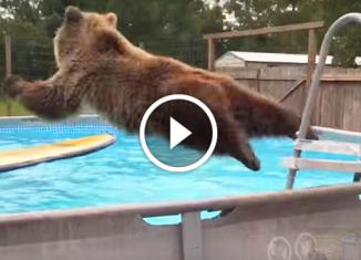 Медведь открыл купальный сезон. Умора!