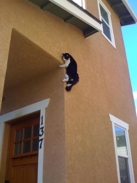 Эти котики знают, как удивить хозяина!