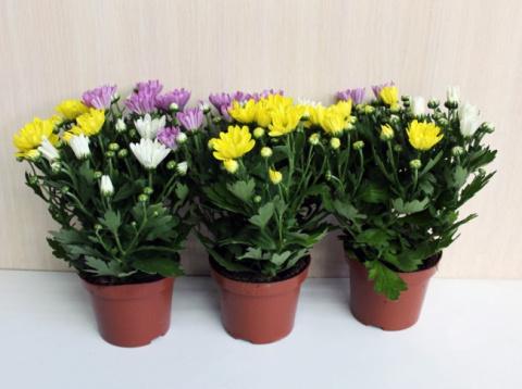 9 комнатных растений, которы…