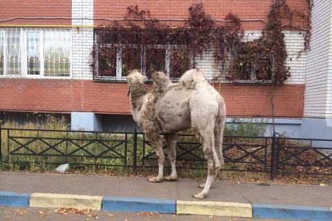 В Казани полицейские задержа…