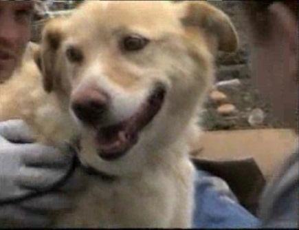 Собака спасла другую собаку …